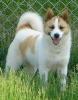 pit2ooo - éleveur canin Dogzer