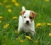 no20 - éleveur canin Dogzer