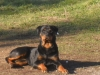 sam07100 - éleveur canin Dogzer