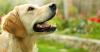 minyheloise28 - éleveur canin Dogzer