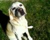 srbm98 - éleveur canin Dogzer