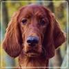 Sumar - éleveur canin Dogzer