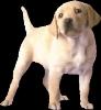 fafolle-25 - éleveur canin Dogzer