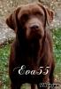 Eva55