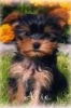 catherine_________ - éleveur canin Dogzer