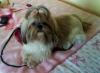 nana9093 - éleveur canin Dogzer