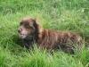 alexandralovechien - éleveur canin Dogzer
