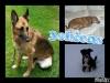 3chiens - éleveur canin Dogzer