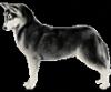 frigiel90 - éleveur canin Dogzer