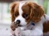 elsa82 - éleveur canin Dogzer