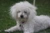 kena24 - éleveur canin Dogzer
