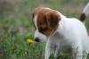 Julia.9 - éleveur canin Dogzer