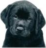 Caramelle35120 - éleveur canin Dogzer