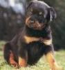 mathilde37390 - éleveur canin Dogzer
