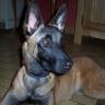 eddy2 - éleveur canin Dogzer