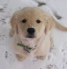 mantega - éleveur canin Dogzer