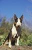 chana1990 - éleveur canin Dogzer
