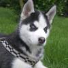 zolia22 - éleveur canin Dogzer