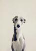 rouky44 - éleveur canin Dogzer
