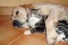 bebechien15 - éleveur canin Dogzer