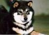 claravirginia - éleveur canin Dogzer