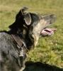 LauraHemme - éleveur canin Dogzer