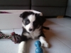 LoreenR - éleveur canin Dogzer