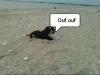 lesupermaitre - éleveur canin Dogzer