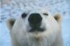 lolazeus - éleveur canin Dogzer