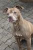 loyz - éleveur canin Dogzer
