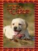 missbatista - éleveur canin Dogzer