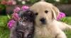 zazou66 - éleveur canin Dogzer