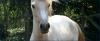 chevalman - éleveur canin Dogzer