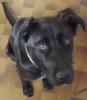 MiniMignonPhoque - éleveur canin Dogzer