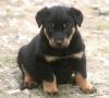 telmayok - éleveur canin Dogzer