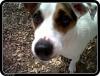marina11 - éleveur canin Dogzer