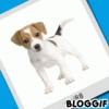 never2 - éleveur canin Dogzer