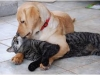 -alienore- - éleveur canin Dogzer