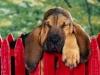 chien19992 - éleveur canin Dogzer