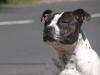 kev4 - éleveur canin Dogzer
