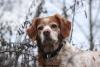 laety02 - éleveur canin Dogzer