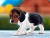 daxi - éleveur canin Dogzer
