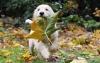 kecha31 - éleveur canin Dogzer