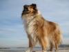 eska29 - éleveur canin Dogzer