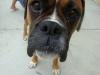 jules47800 - éleveur canin Dogzer
