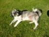 dogie07 - éleveur canin Dogzer