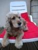 melissandre20 - éleveur canin Dogzer