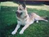 Dogsamel - éleveur canin Dogzer