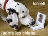 lorrie9 - éleveur canin Dogzer