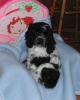elise654 - éleveur canin Dogzer